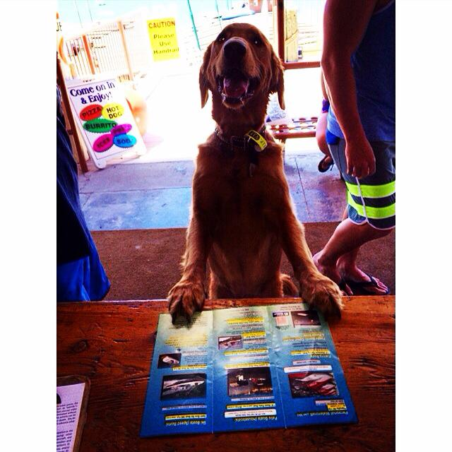 2014-bass-lake-california-water-sports-dog-renting-boat