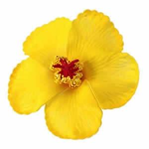 Bass Lake Boat Rentals Yellow Flower Image 001
